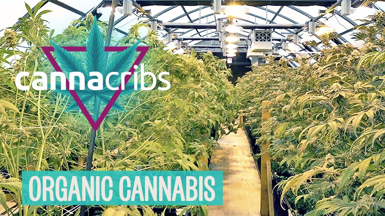 Inside America's Top Organic Cannabis Farm Oregon's Yerba Buena